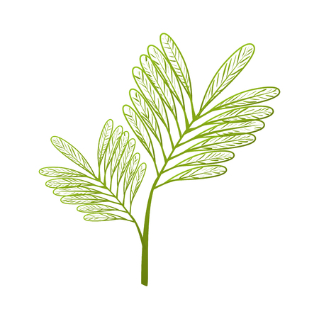 plant green leaves ecology leaves silhouette vector graphic isolated and flat illustration Illustration