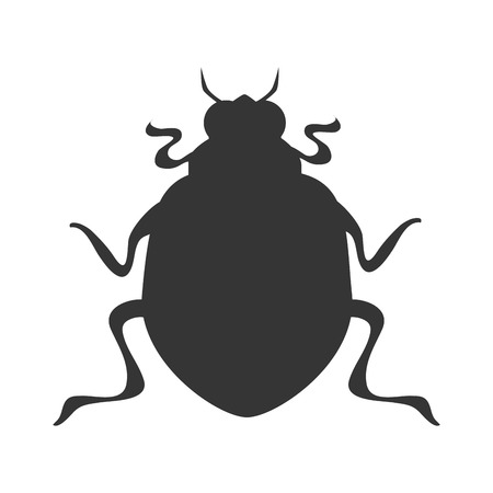 coleoptera: bug scarab beetle insect animal  vector graphic isolated and flat illustration