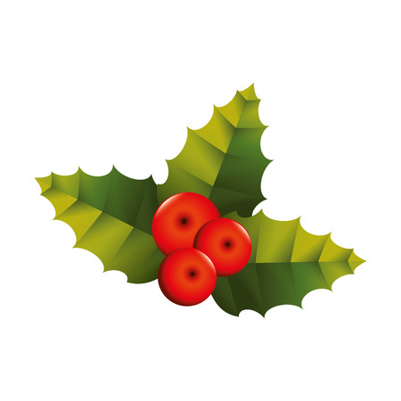 christmas plant: decoration christmas plant leaf european berry december vector graphic isolated and flat illustration Illustration