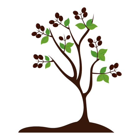 tree plant coffee red bean grain agriculture nature vector graphic isolated and flat illustration