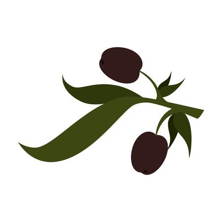 olive plant food organic leaves oil natural vector  isolated illustration Illustration
