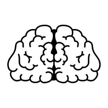 lobes: brain mind head intellectual think human organ mental vector  illustration isolated