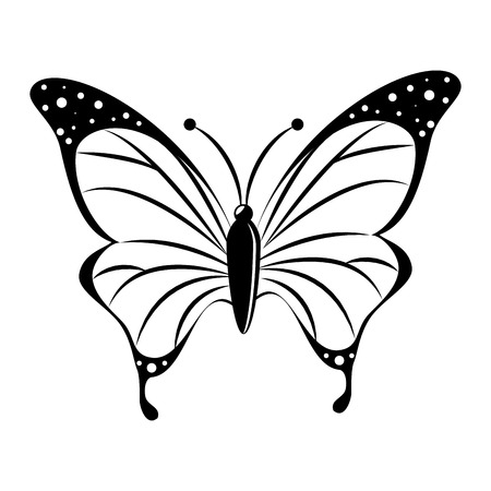 butterfly animal insect animal wings fly spring artistic vector front illustration isolated front