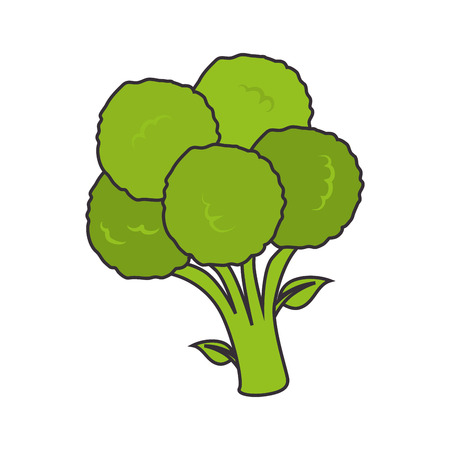 vegetable cook: broccoli vegetable food natural organic cook ingredient vector illustration isolated