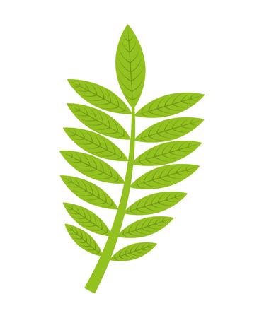 autumn leafs decoration season icon vector illustration design