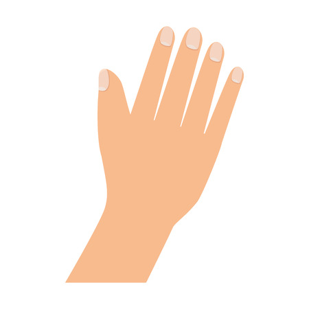 finger nails: hand palm finger nails care human gesture vector illustration Illustration