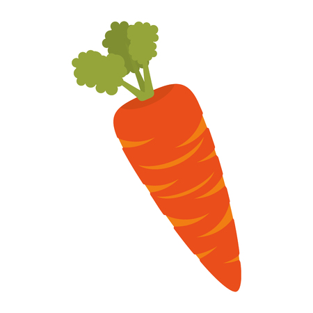 ingredient: carrot orange vegetable fresh food healthy ingredient agriculture vector illustration