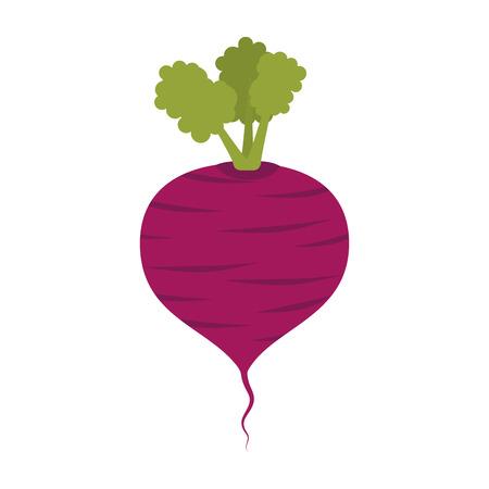 la betterave alimentaire de betterave légume racine organique vecteur naturel illustration