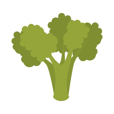 vegetable cook: broccoli vegetable food natural organic cook ingredient vector illustration Illustration
