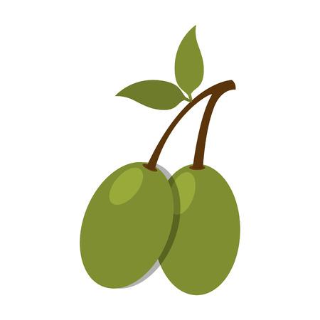olive fruit branch leaves green nature organic vector illustration