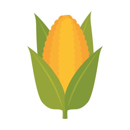 aliment: corn vegetable food natural agriculture harvest vector illustration