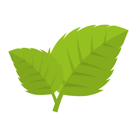 foliage  natural: leaves natural green plant ecology sheet foliage enviroment vector illustration