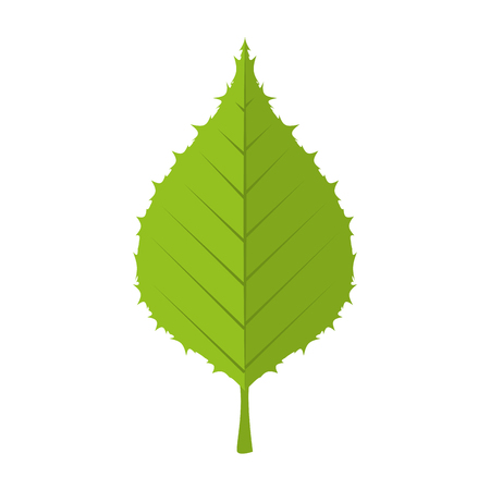 leaf natural green plant ecology sheet foliage enviroment vector illustration