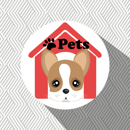 boston bull terrier: dog pets house icon vector illustration icon eps 10