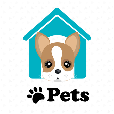 boston bull terrier: dog pets house icon vector illustration icon eps 10