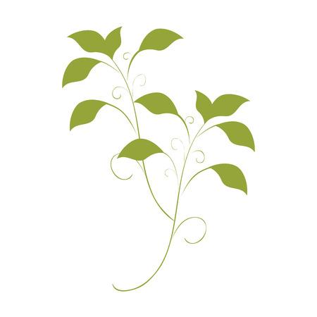 green leaves plant natural sheet ecology vector illustration