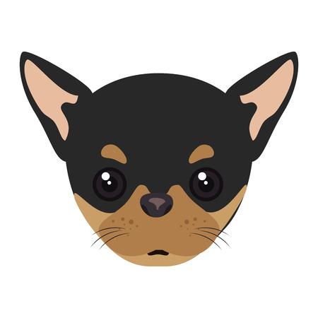 canine: pinscher dog breed canine pet animal. puppy cartoon. vector illustration