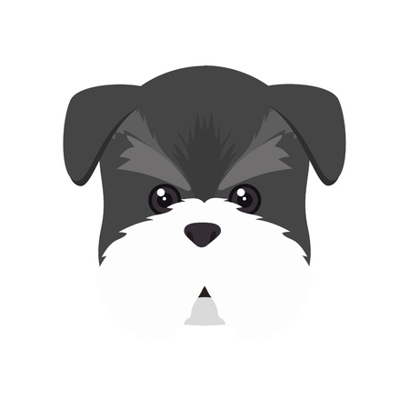 canine: schnauzer dog breed canine pet animal. puppy cartoon. vector illustration