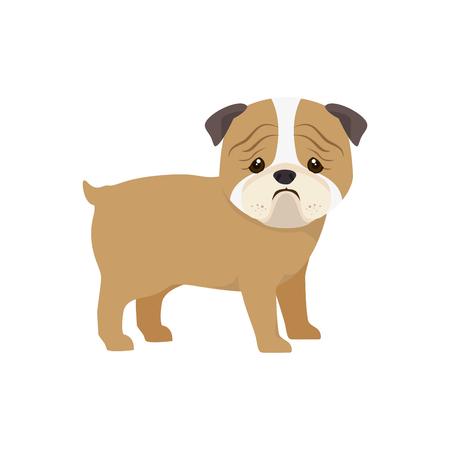 pug puppy: pug breed dog canine pet animal. puppy cartoon. vector illustration