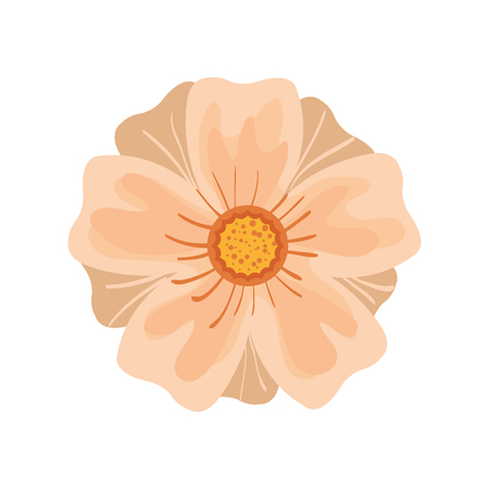 nature beauty: floral blossom. nature beauty flower. vector illustration