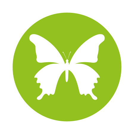 butterfly isolated: cute butterfly ecology isolated icon vector illustration design