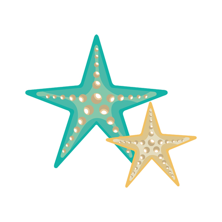 blue and white sea stars with pearls. ocean marine element. vector illustration Illustration