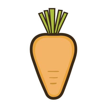 orange carrot with green leaf.  healthy  vegetable food. vector illustration