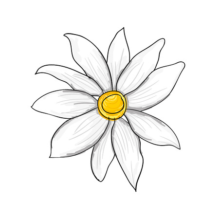 beautiful floral white blossom. flower plant. vector illustration