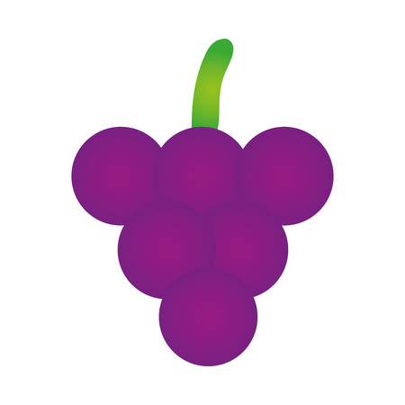 purple grapes: purple grapes fresh fruit healthy food. vector illustration Illustration