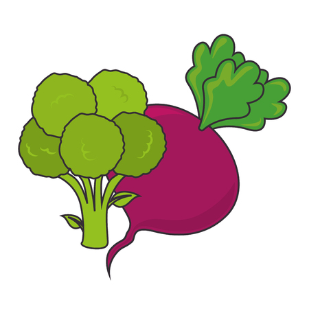 green broccoli and betroot. vegetable healthy food. vector illustration