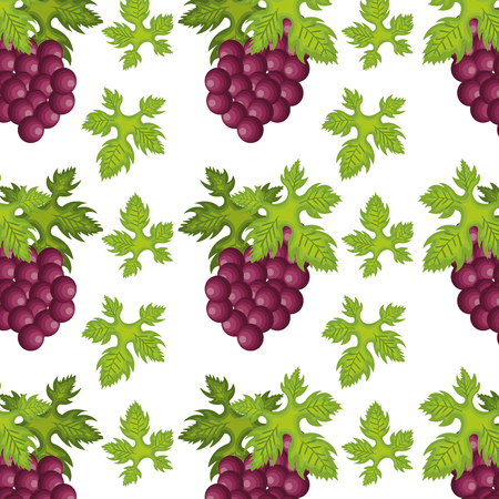 purple grapes: bunch of purple grapes fruit with green leaves background. vector illustration Illustration