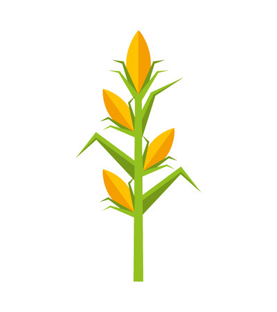 corn plant isolated icon vector illustration design