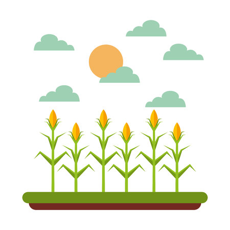 harvest of corn over landscape background. farm and agriculture design. vector illustration