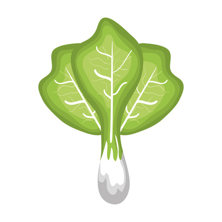 fresh lettuce vegetable isolated icon vector illustration design