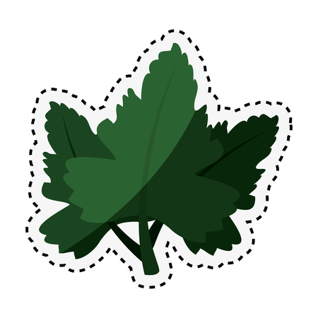 coriander leaves ingredient isolated icon vector illustration design