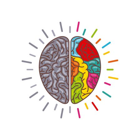 hemispheres: human brain with two cerebral hemispheres icon over white background. colorful design. vector illustraiton