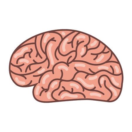 human brain organ isolated icon vector illustration design Foto de archivo