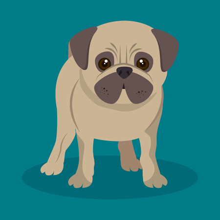 gaze: cute pug doggy standing blue background vector illustration eps 10