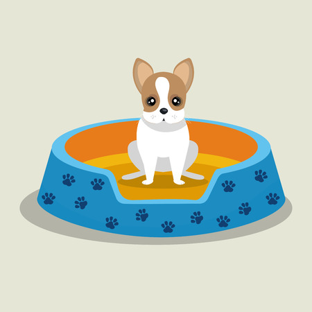 boston terrier: boston terrier puppy blue bed pet vector illustration eps 10