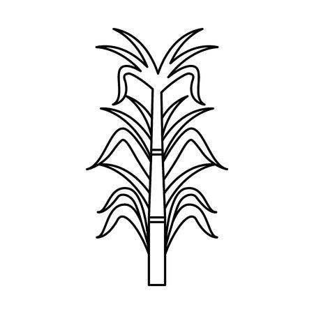 sugar cane isolated icon vector illustration design Illustration