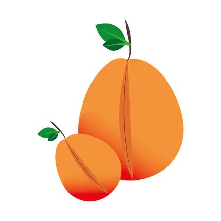 colorful silhouette set mango fruit vector illustration