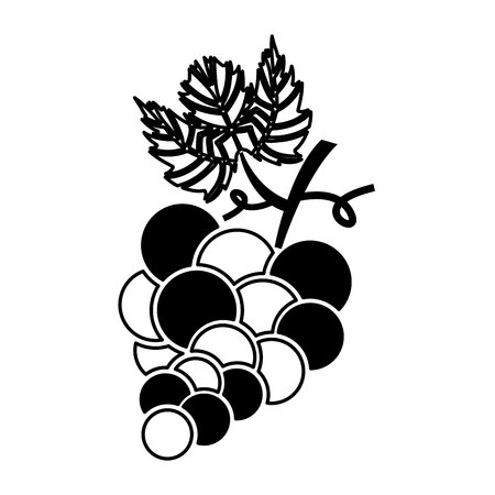 grapes fruit isolated icon vector illustration design Illustration