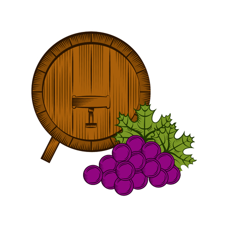 barrel with bunch of grape over white background. wine house concept. colorful design. vector illustration