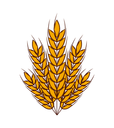wheat ears icon over white background. colorful design. vector illustration
