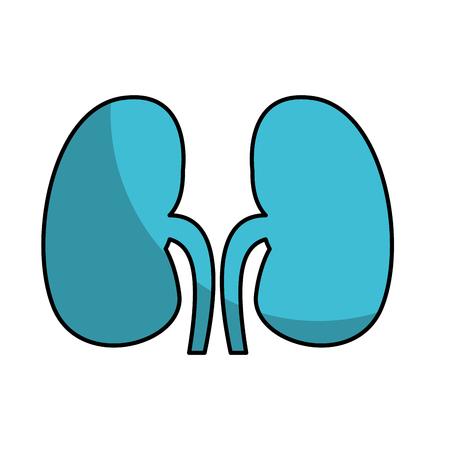Diseño del ejemplo del vector del icono de los riñones del órgano humano Foto de archivo - 74816088