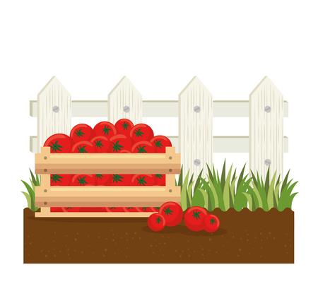 tomatoes basket farm product vector illustration design