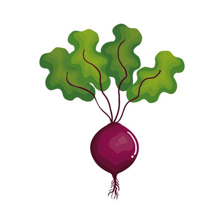 Vers ontwerp van de het pictogram vectorillustratie van de bieten het plantaardige Stockfoto - 76358120