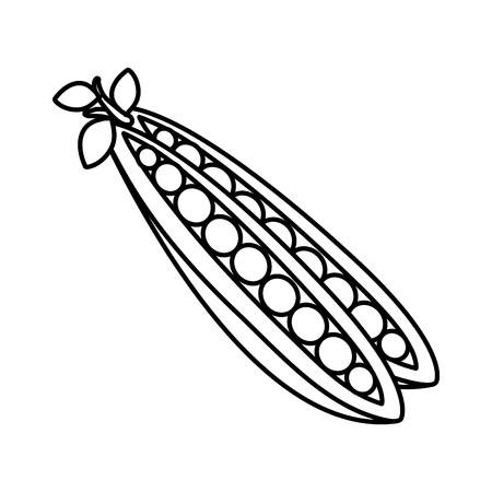 fresh beans vegetable icon vector illustration design Ilustração