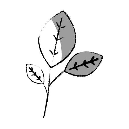 Leafs plante décorative icône vector illustration design Banque d'images - 76509793