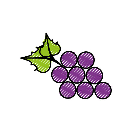 Bunch of grapes icon over white background. colorful design. vector illustration Illustration